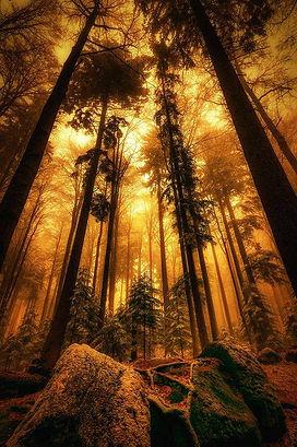 forest healing.jpg