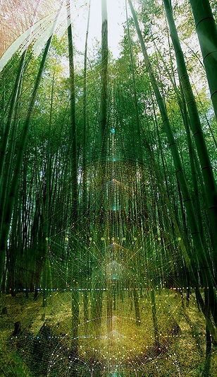 mystical bamboo forest
