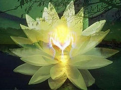 within your heart is a lotus