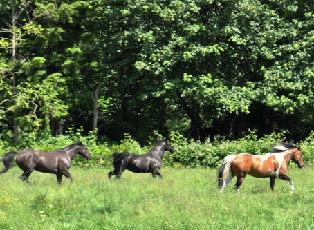 Now Offering Equine Assisted Therapy Sessions ~Shannon Gordon, Registered Therapeutic Counsellor