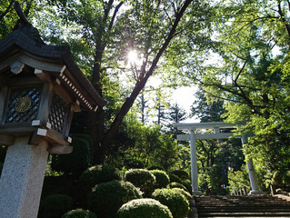 越後の一の宮「彌彦神社」へ