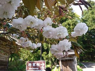 近くの天然記念物「三川の将軍杉」