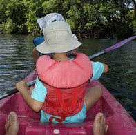 découverte de la mangrove