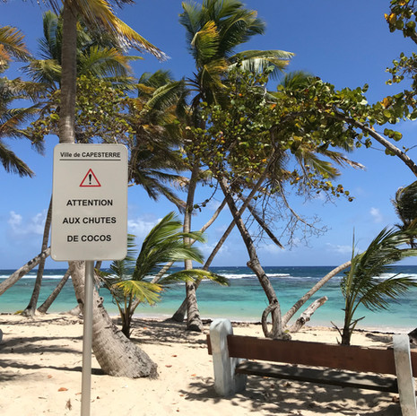 la plage de Petite Anse et ses cocotiers