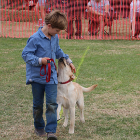 Dog Sports & Children's Pets - Sunday morning