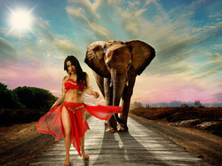 Elephant-HD-Wallpapers-Desktop-Pictures-6mk