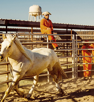 At a state penitentiary in Airzona, prisoners are learning how to tame wild horses