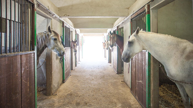 Pension Equestre Marboz Ain