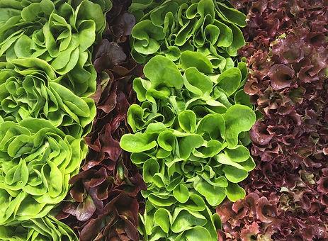28ct Lettuce Mix