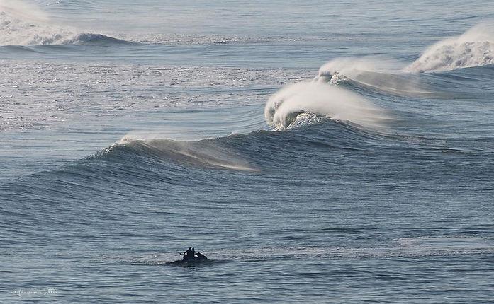 l'intranquSurfer les vagues de la vie (p
