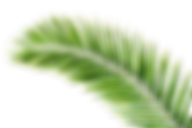 palm-leaves-picture_edited.png