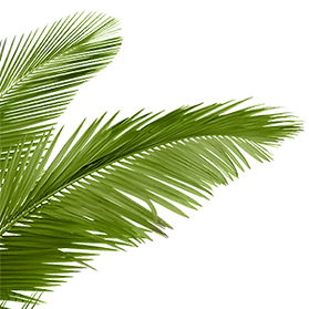 png-hd-palm-tree-beach-a-wide-variety-of