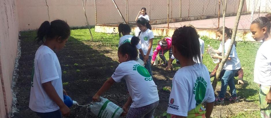 Projeto Horta Comunitária é implantado na Vila Curuçá