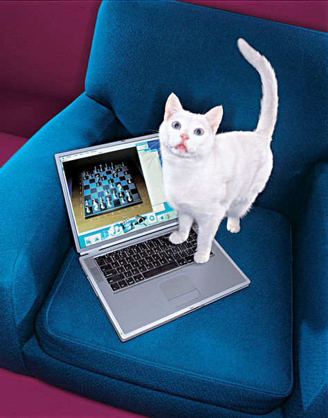 Money-laptops-cat11x14.jpg
