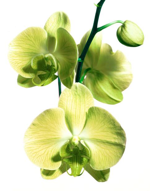 Flowergreen.jpg