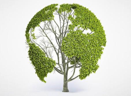 """Blog """"Negócio Sustentável"""""""