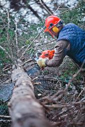 professional-lumberjack-work-in-krazy-ju