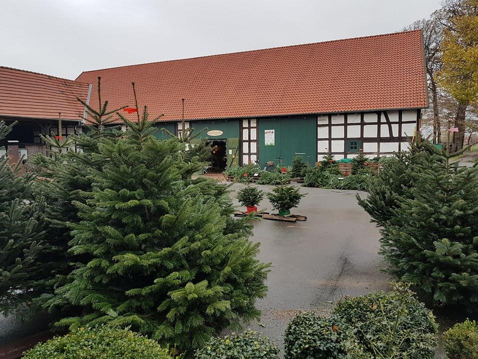 Gallerie Weihnachtsbaumverkauf 2.jpg