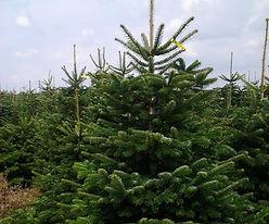 Gallerie Weihnachtsbaumverkauf 1.jpg