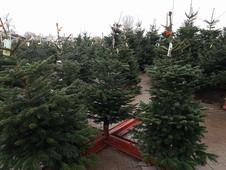 Gallerie Weihnachtsbaumverkauf 5.jpg