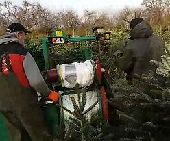 Netzmaschine Weihnachtsbäume.JPG