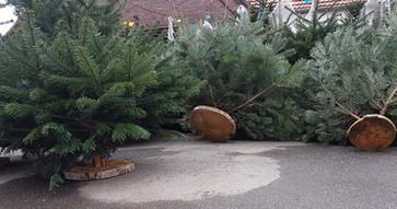 Gallerie Weihnachtsbaumverkauf 12.jpg