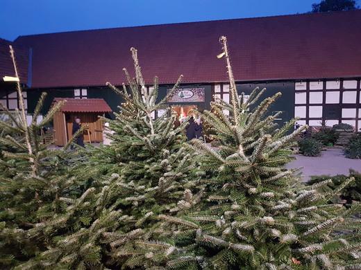Gallerie Weihnachtsbaumverkauf 8.jpg