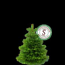 Weihnachtsbaum S.png