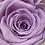Thumbnail: Akrilik Kutuda Solmayan Güller