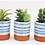 Thumbnail: Blue & White Ceramic Faux Succulents