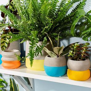 Colour Block Planters