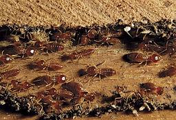 Reward Pest Control