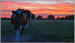 Curlew Fields Farm