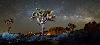 National Parks, Joshua Tree