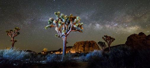 National Parks, Joshua Tree, Adventure, Travel