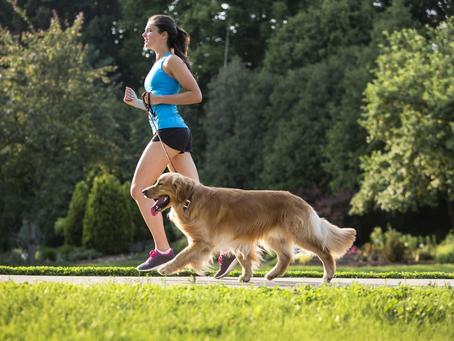 ¿Cuándo es mejor ejercitar a nuestra mascota?