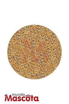 Conejo comun cereales alimento Mundo Mascota Moreno