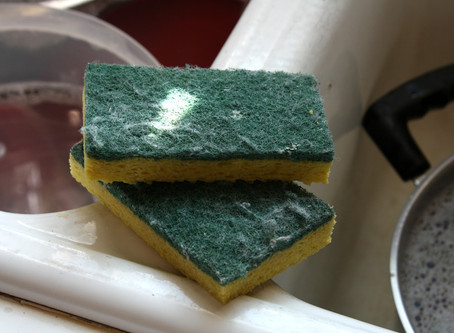 How long before we throw that dish sponge away?