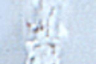Lâmpada com pernos para mínimos laterais 12 v 5 w.