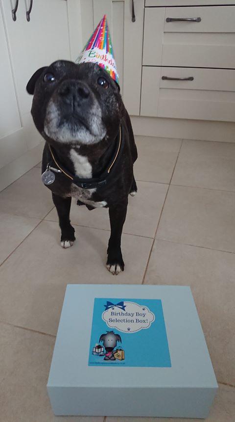 Diesel's Birthday!