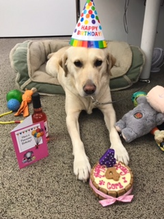 Guide Dog Cora's 4th Birthday!