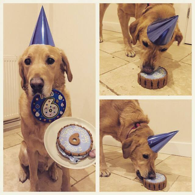 Regular Birthday Boy Ringo turns 6!