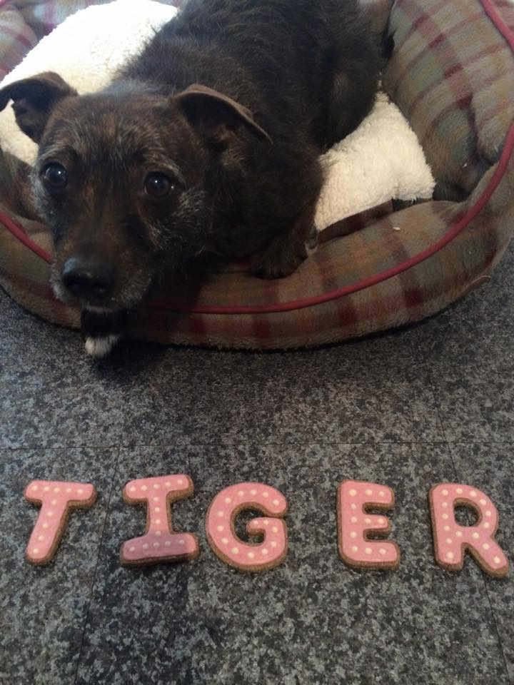 Tiger with her name in cookies