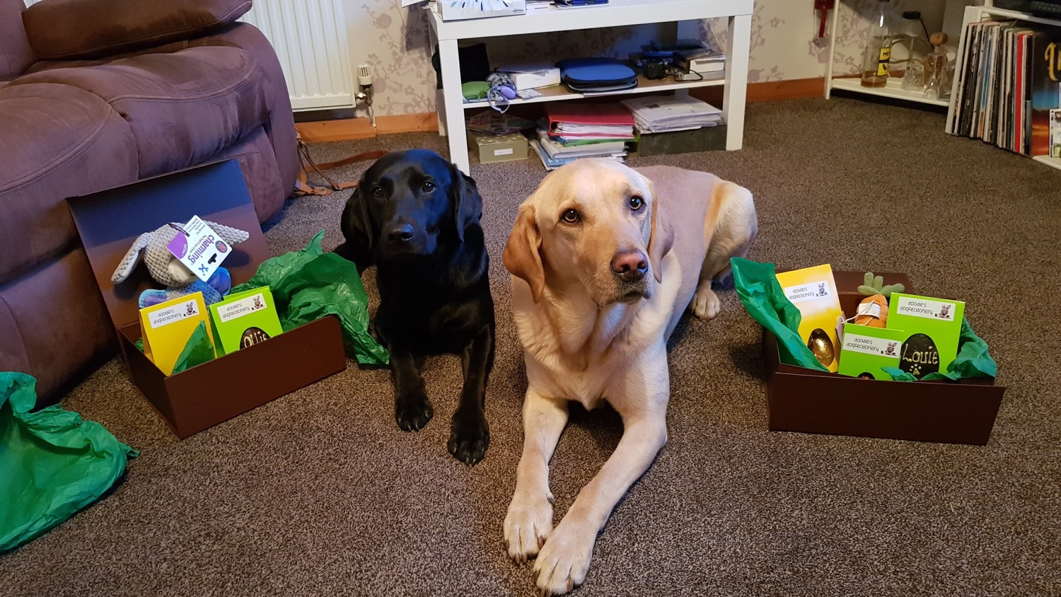 Ollie & Louie with their Easter boxes