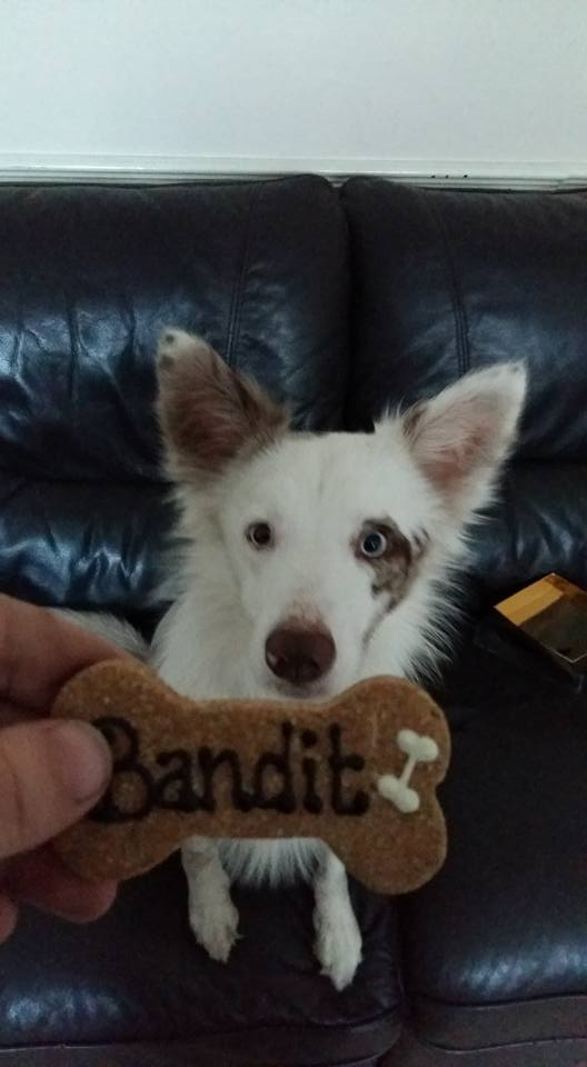 Bandit with his personalised cookies