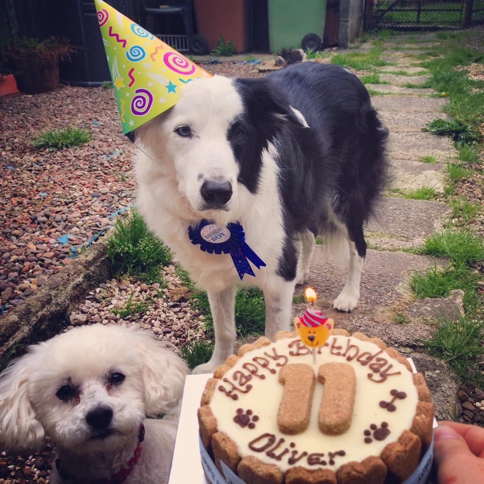 Oliver turns 11!