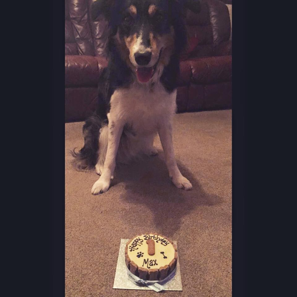 Max's 1st Birthday!