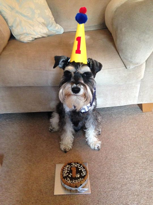 Jackson rocking his party hat ..