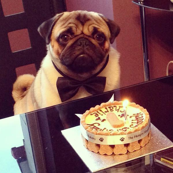 Charlie dressed for cake!