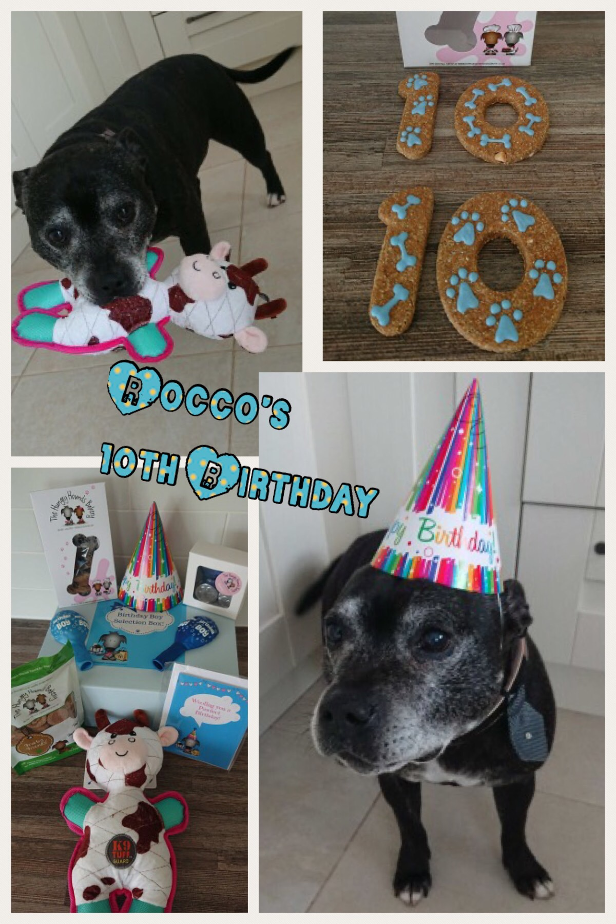 Rocco turns 10!